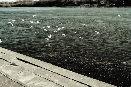 A bunch of seagulls flying off the river shore beautiful scene