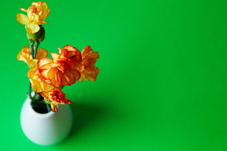 bouquet of orange-yellow carnation flowers in white ceramic vase on green background isolate