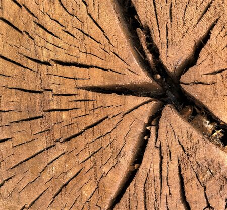 Background texture brown trunk Old big dry tree natural structure