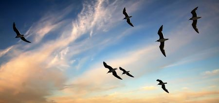 A flock of seagulls soaring above the sea on the background of the sunset sky with clouds.