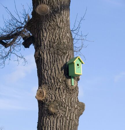 House for wild birds on the trunk of a large tree with thick bark. Stock Photo