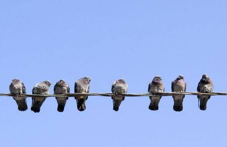 pigeons: Pigeons eux-m�mes r�chauffement au soleil de printemps, assis sur le fil. Banque d'images