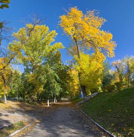 Orange and yellow trees in the park. Autumn landscape, non urban scene.