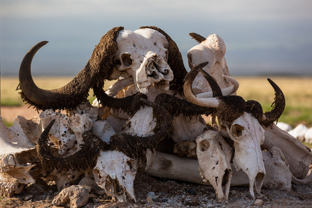 Kenya safari, animal skulls, horns, bones, stones, sand, grass, sun, day, travel, Africa Stock Photo