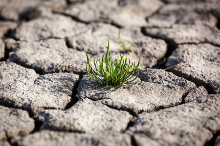 land plant: Drought, dry earth, crack, sun, peace, sadness, dried up water, a crack in the ground, dying without water, dry riverbed, dry river dry lake land Stock Photo