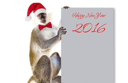 abstract gorilla: Capuchin Monkey on a white background with a notebook for records, new year, christmas, new year animal