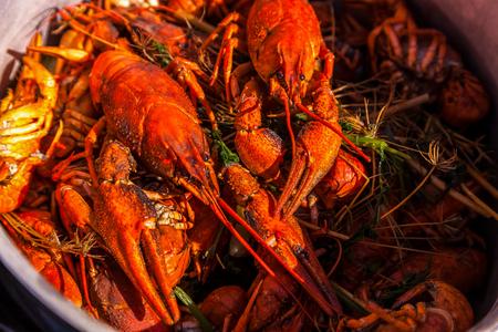 crustaceans: crayfish for beer, boiled crustaceans, crayfish, beer snacks, gourmet food