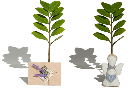 Plants, toy and greeting card.Two branches with green leaflets, angel toy and greeting card of handmade on a white background. Stock Photo