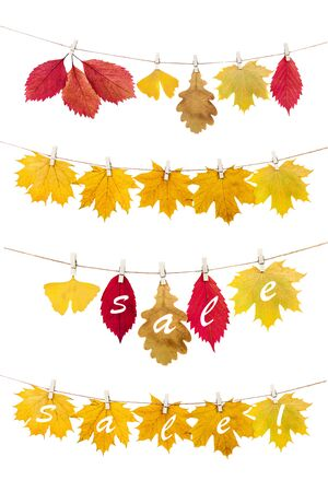 Autumn leaves.The multi-colored fallen autumn leaves for sale , hanged  on a clothesline with the pins, on a white background. Stock Photo
