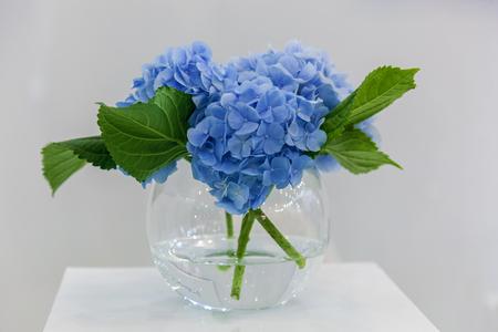 Bouquet Of Blue Hydrangea Flowers In A Vase On A Pedestal Stock