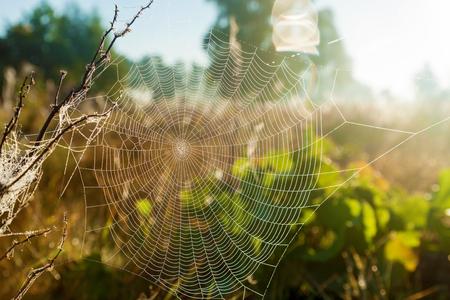 Spinneweb op de achtergrond van de zon en het veld gras, close-up. Spinnenweb op de achtergrond van de zon .. Stockfoto