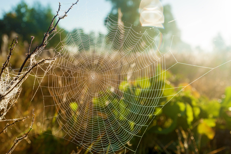 Spider web on the background of the sun and field grass, close-up. Spider web in the background of the sun..
