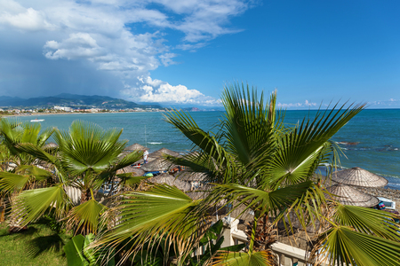 Dancing shadows of a palm leaf against the blue sky,Leaf of a palm