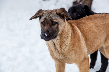 Stray dogs with sad eyes in winter outside. Hungry puppies live on the street and freeze from the cold in winter.
