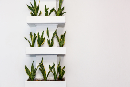 Plants in square pots on a light wall on the shelves. Decorations for office and home, interesting design solutions Stok Fotoğraf
