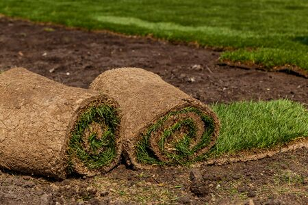 Green grass in rolls for lawn and designer landscape. The stacking of roll green lawn grass Stok Fotoğraf