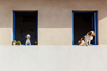 A minimalist view of the facade of the building with two big windows. Dogs are observing all around from windows.