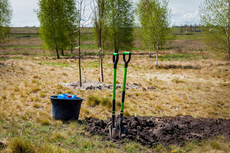 Two shovels and a bucket stand near growing young trees. Shovels near young trees