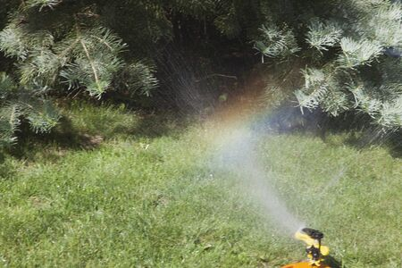 Irrigation system of the lawn at the sunshine produces a rainbow over green grass. photo