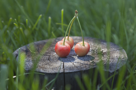 farme: Yellow and pink cherries on a wooden stand surrounded by light green grass.