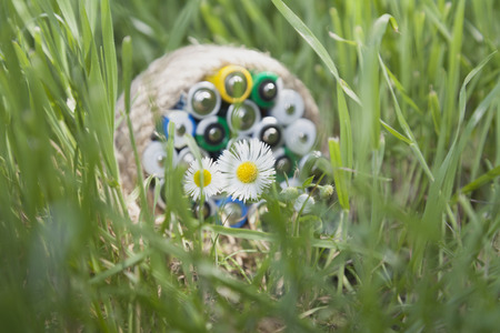 farme: Camomile flowers in a bright sunbeam in the foreground and blurred batteries wrapped a rope on the grass.