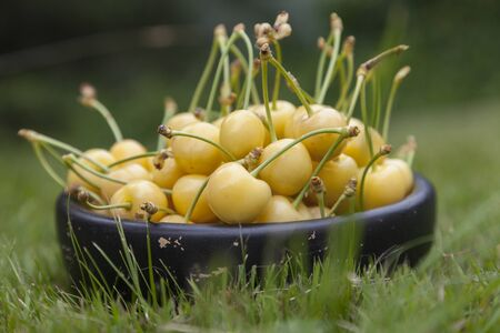 Yellow cherries in black wooden bowl close-up on green grass.