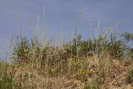 farme: Wild grass and field flowers on blue sky background in the summer.