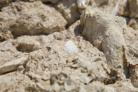 pit fall: Fossil corals and shells of the Red Sea. Stock Photo