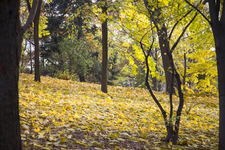 wilting: Slope in autumn park. Bushes and trees in the autumn. Stock Photo