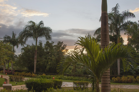 warm climate: Park in the tropics. Sunset after the rain.