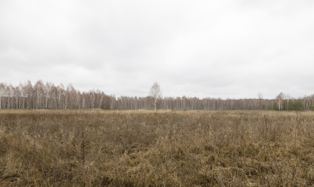 frondage: Forest and meadow in late autumn. Withered grass, trees without leaves. Stock Photo