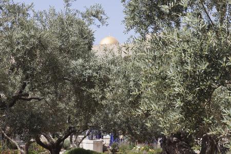 ministration: Garden of Gethsemane, Jerusalem.