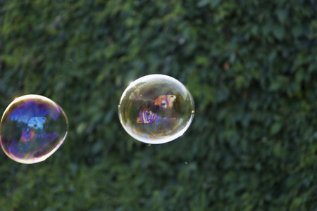 waft: Rainbow soap bubbles on green blurred background.