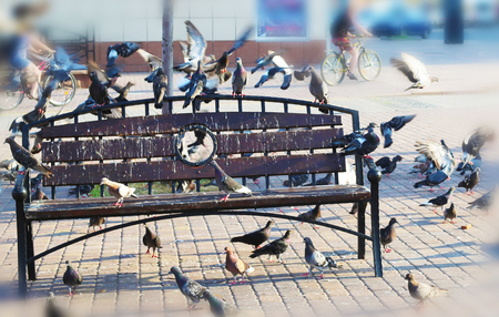 pigeons on the bench