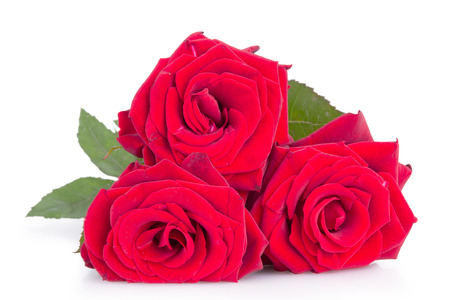 three red roses isolated on white background photo