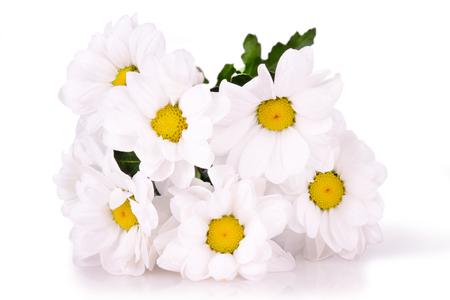 white daisies: white daisies isolated Stock Photo
