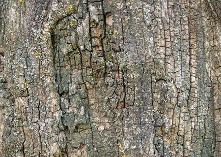 surface closeup: old tree brown bark surface closeup Stock Photo