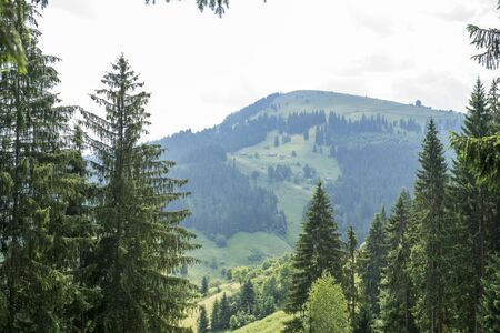 forested: landscape with forested mountain behind high trees