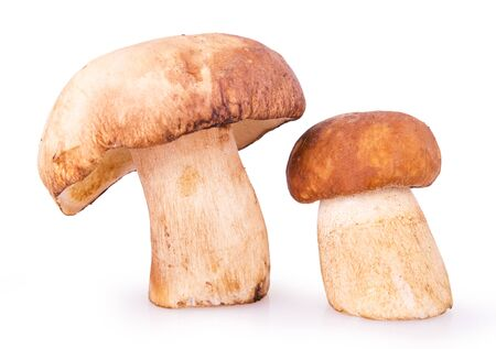 Two brown mushrooms closeup on a white background