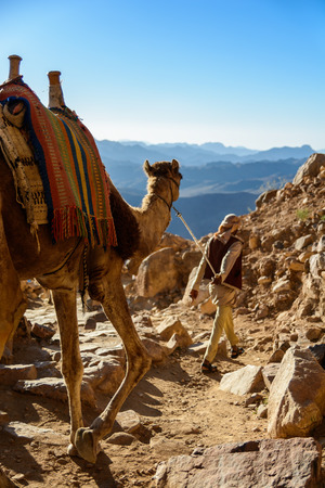 Egypt, Sinai, Mount Moses. Road on which pilgrims climb the mountain of Moses and bedouin with camel on the road.