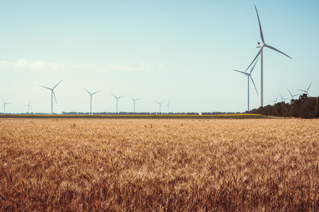 Wheat field and eco power, wind turbines photo