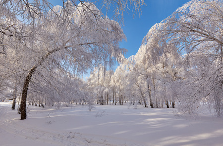 Beautiful winter forest in the bright sunny day - a photo 14