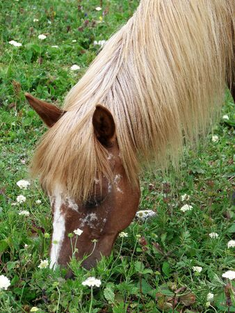 eats: The horse with a light mane eats a grass and flowers