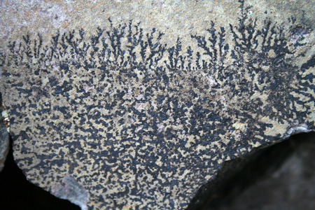 mineralization: Fossils of plants antediluvian ancient times. The imprint of ancient plants on a background of stone