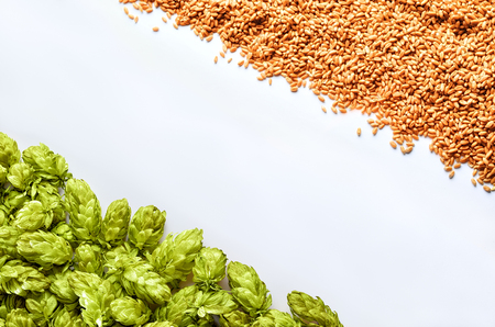 Beer template with diagonal placement hops and wheat on white background. Top of the view. Mockup  ready for your design. Stockfoto