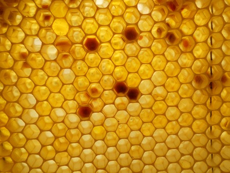 honeycombs: honey and honeycombs Stock Photo