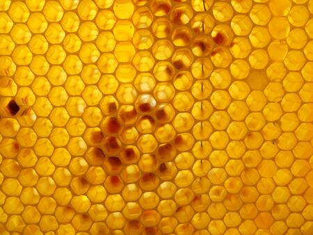 honeyed: honey and honeycomb Stock Photo