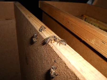 beeswax: bees