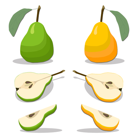 vector illustration  for the theme of the fruit Pear Illustration