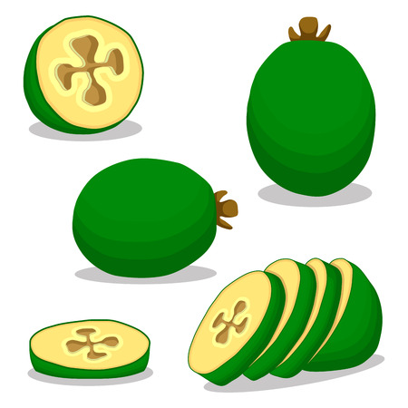 Abstract vector illustration of logo for the theme of the green fruit feijoa